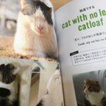 ネコ好きな英語学習者に「ねこたん」(ΦωΦ)/