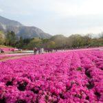 武甲山×芝桜 cafe LOGMOGのブリトー~武甲山~橋立鍾乳洞~羊山公園の芝桜