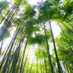 鎌倉アルプス・衣張山ハイキングコースで海街ダイアリー~竹の報国寺~秋本のしらす丼